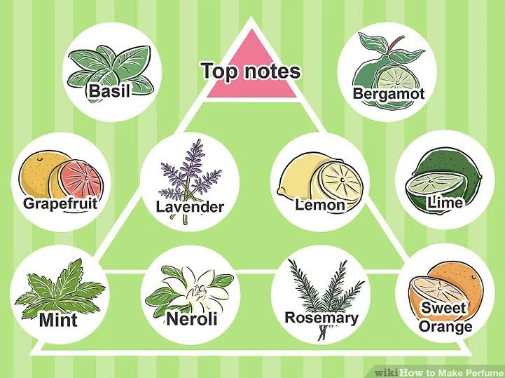 آموزش ساخت عطر-با نتهای بالایی معروف در حوزه عطر شناسی بیشتر آشنا شوید