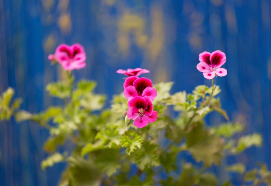 عطر مخصوص بهار برند مرچنت ونیس