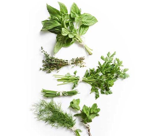 نت های سبز-برگ چای
