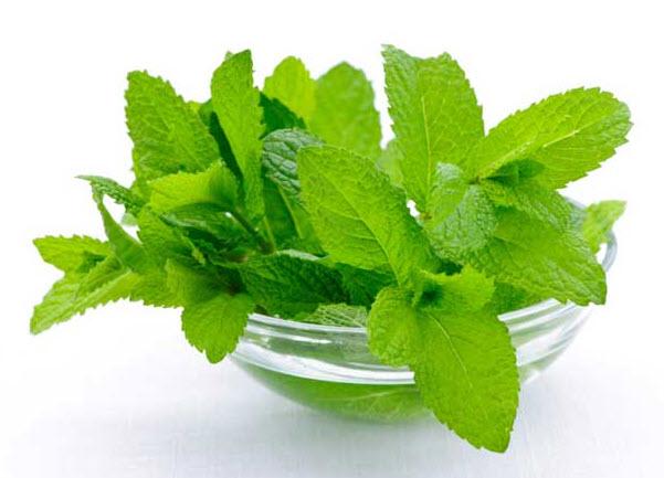نت های سبز-گیاهان معطر