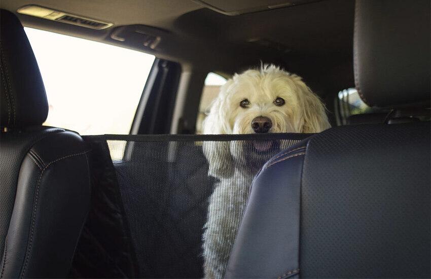 اهمیت خوشبوکننده های خودرو برای راننده های دارای حیوانات خانگی